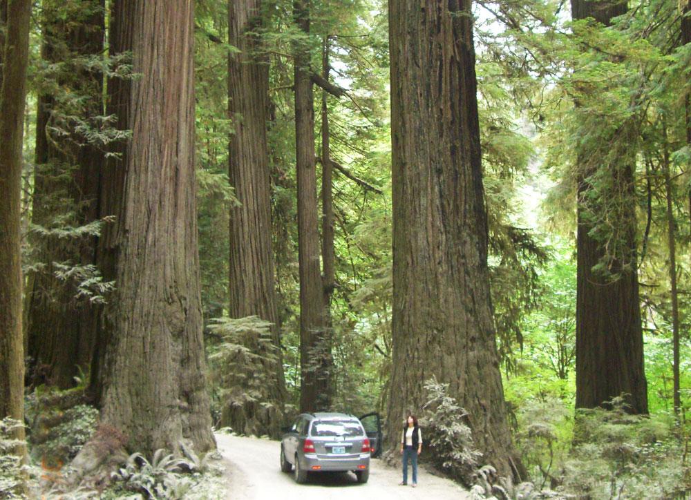 Naturparks an der kalifornischen Küste