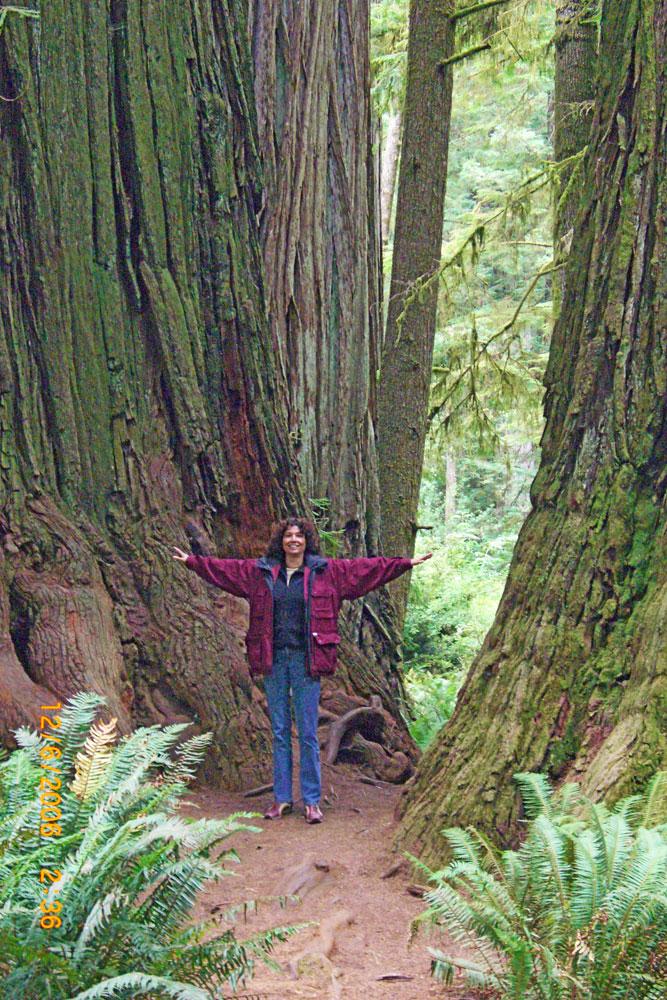 Redwoods-Christine-Mattauch
