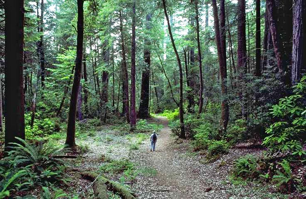 Redwood: Verwunschene Riesen