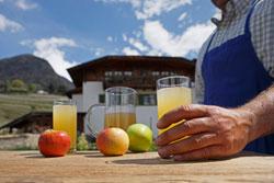 Südtirol: Kräuterwissen sammeln