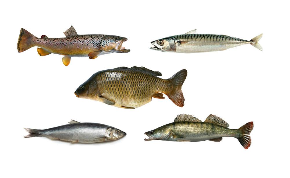 Meeres-Schutz mit dem Geldbeutel