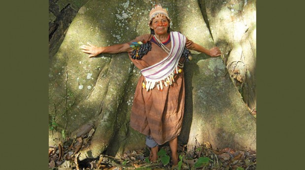 Mahagonibaum  Mahagoni: Baum der Glücksritter   quell-online.de