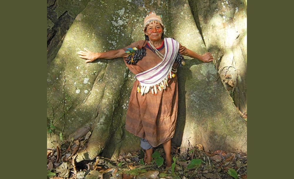 Mahagoni: Baum der Glücksritter