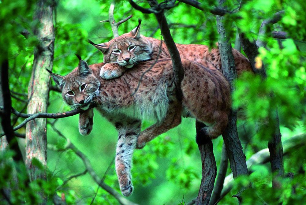 Bayerischer Wald: Tierisch wildes Walderlebnis für die ganze Familie