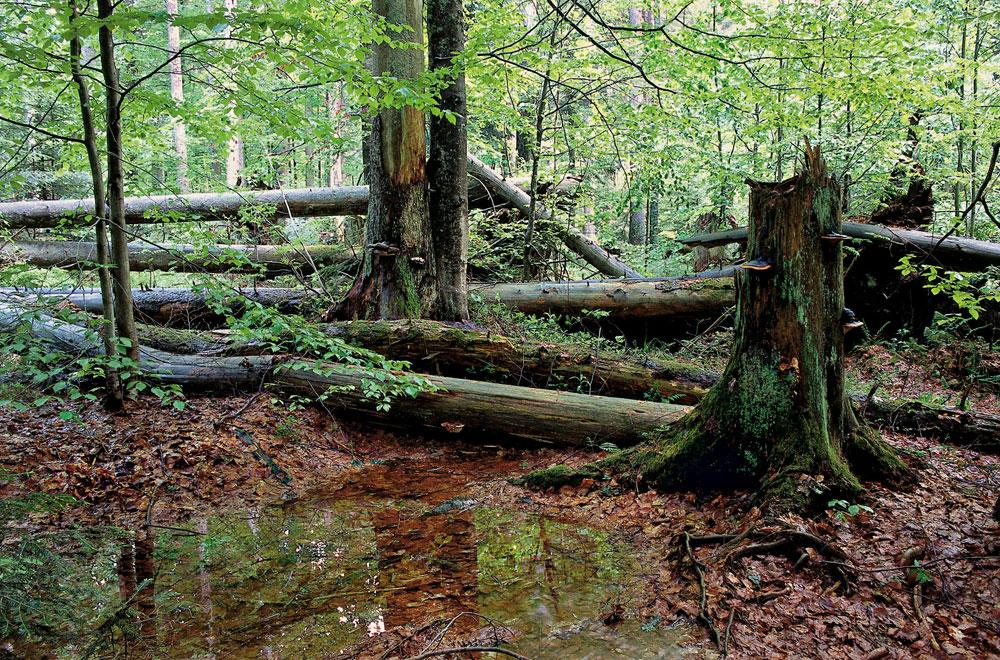 Ur-Laub im Ur-Wald