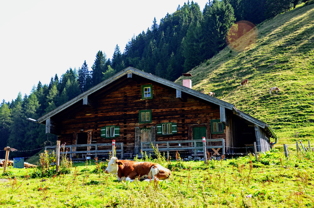 BaumoosAlm - Berghütte