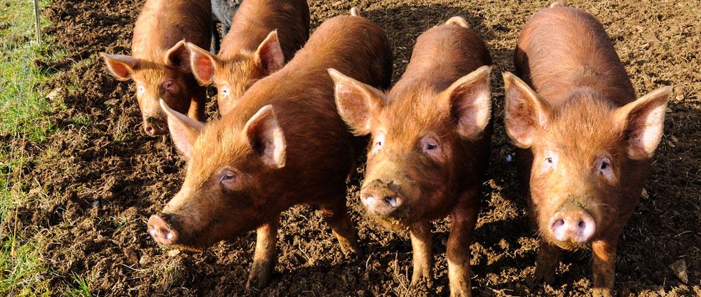 Tierfabriken stoppen