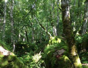 37L01-Heiliger-Wald