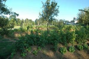 GartenTSSalatbeet