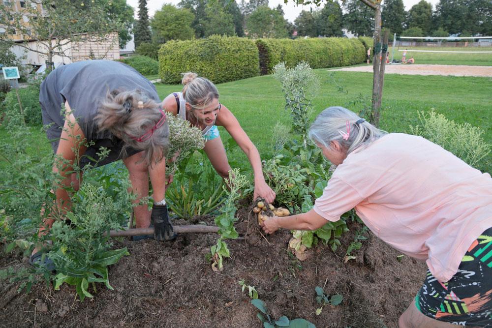 Vom brachen Feld zum fruchtbaren Garten
