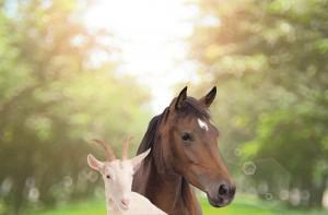 39E05-Pferd+Ziege