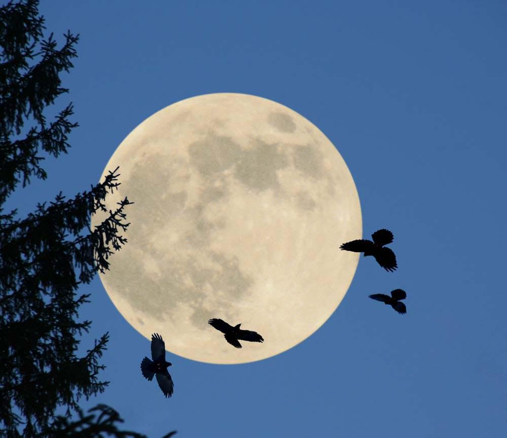 Entschleunigen mit dem Mond