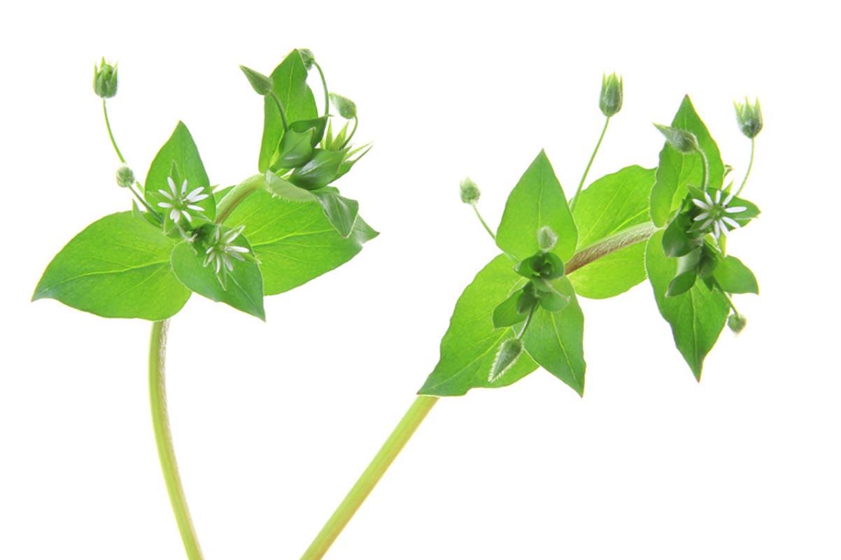 Grünes Kraftpaket