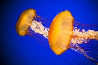 Einladung zur Entdeckung des Ozeans – Nausicaa Museum in Frankreich