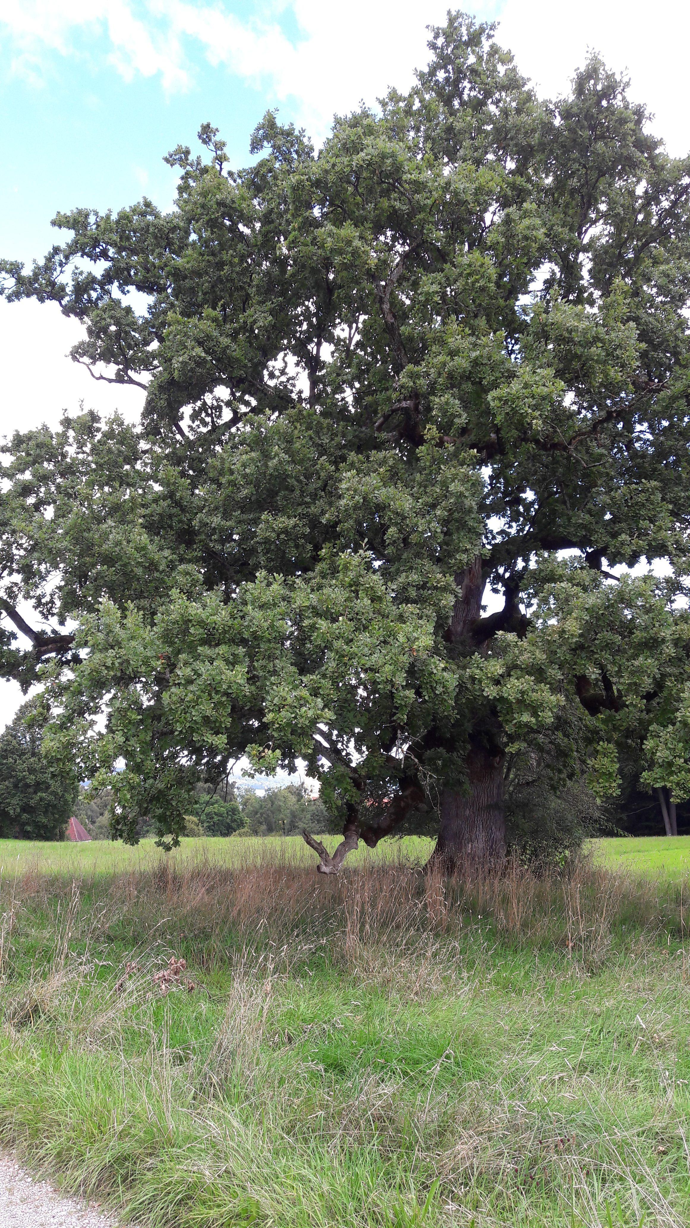Bäume für Menschen
