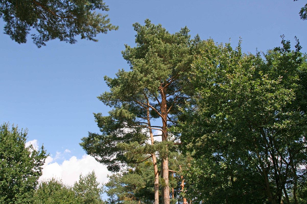 Waldbaden – Aromatherapie für den Körper