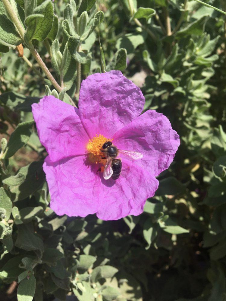 Welttag der Bienen – Ohne Bienen kein Obst und Gemüse