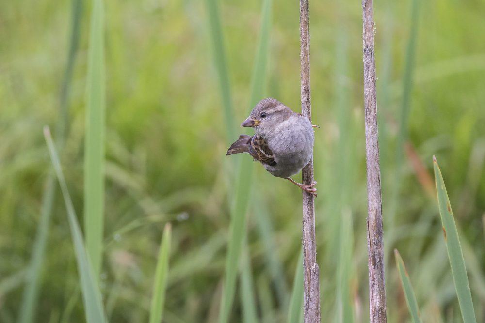 Vogelschutz durch ökologischen Landbau