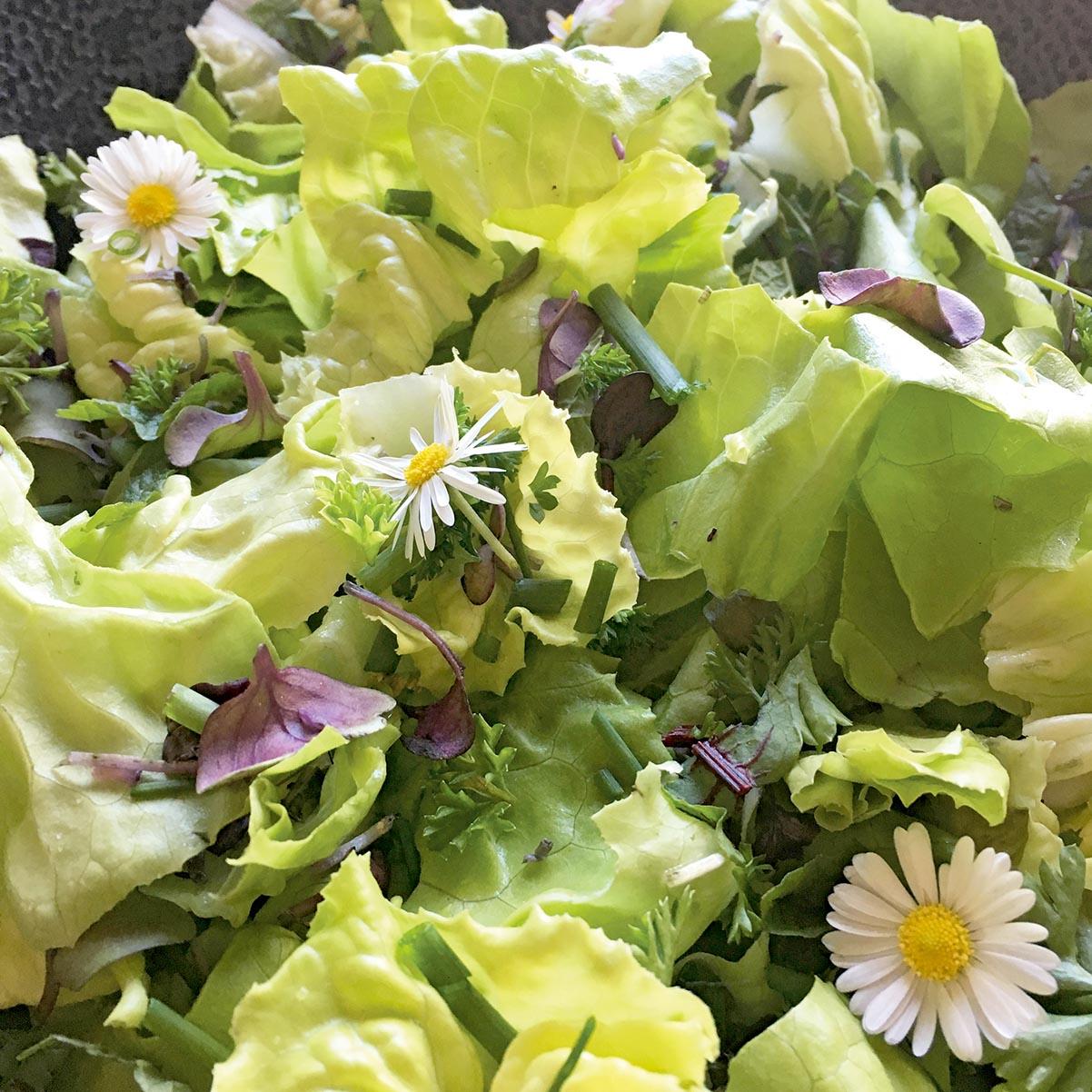 Frühlings – und Wildkräuter Salat