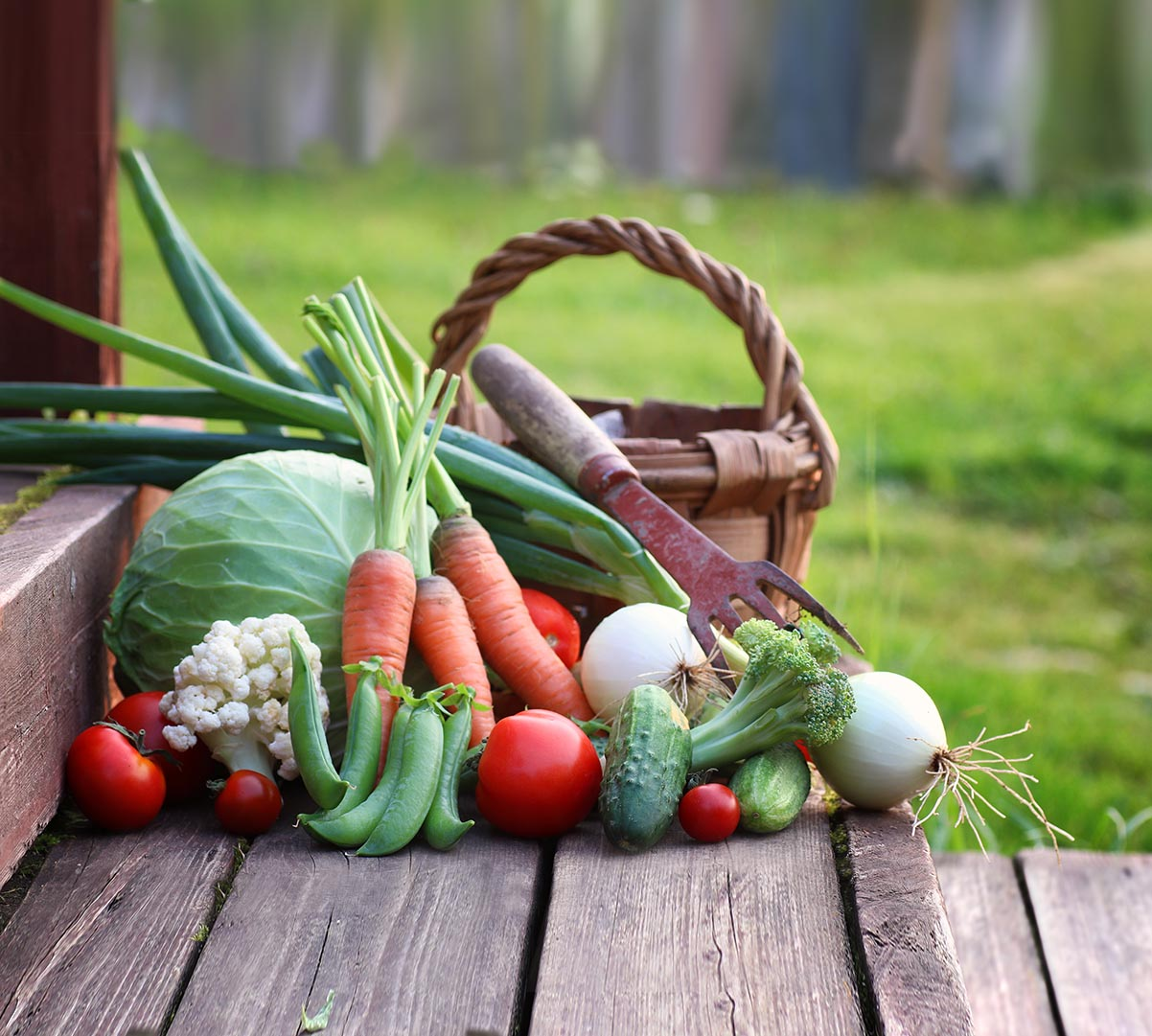 Lebensmittel als Mittel zum Leben