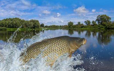 Fische mit gutem Gewissen