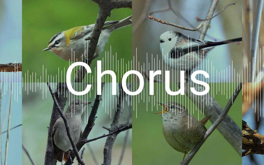 Weltweiter Vogel-Chor