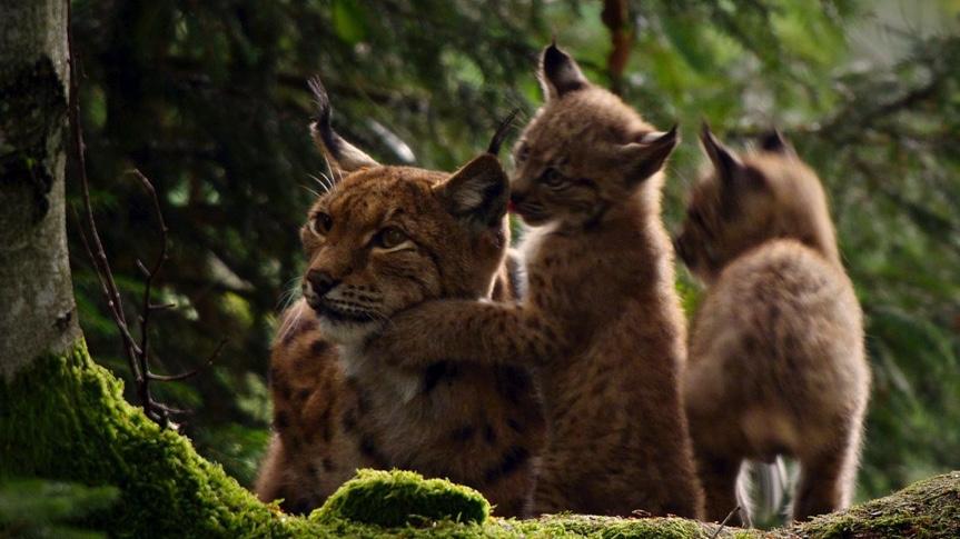 Dokumentarfilm über den wilden Wald