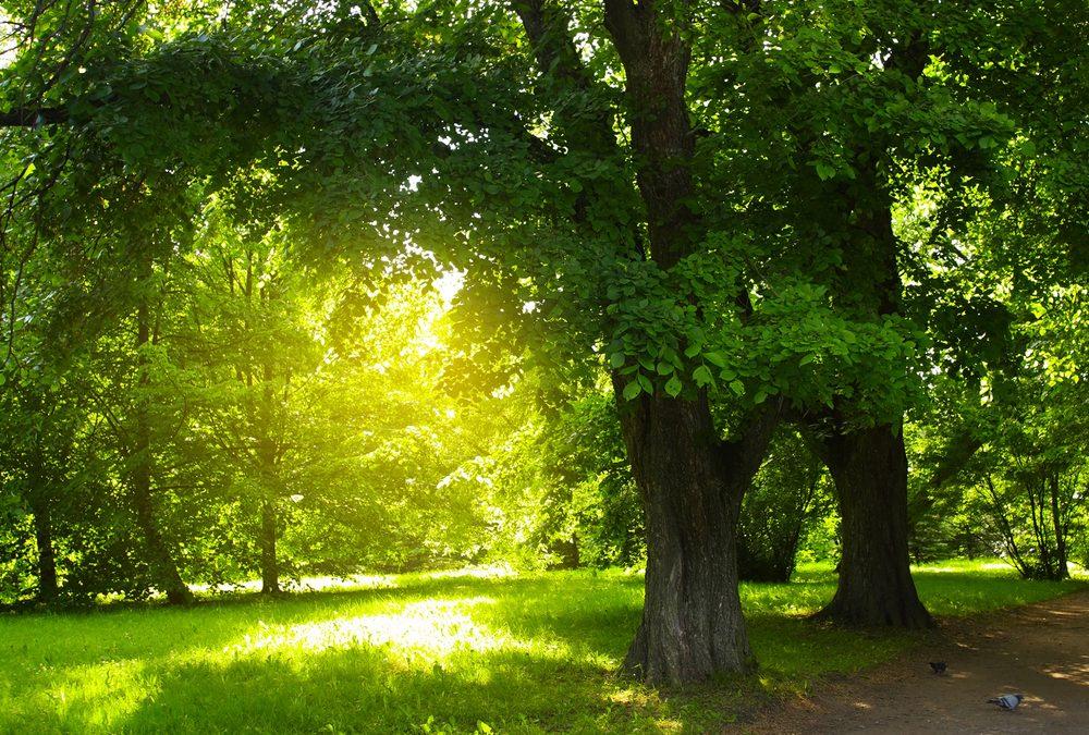 Durchatmen in grünen Oasen