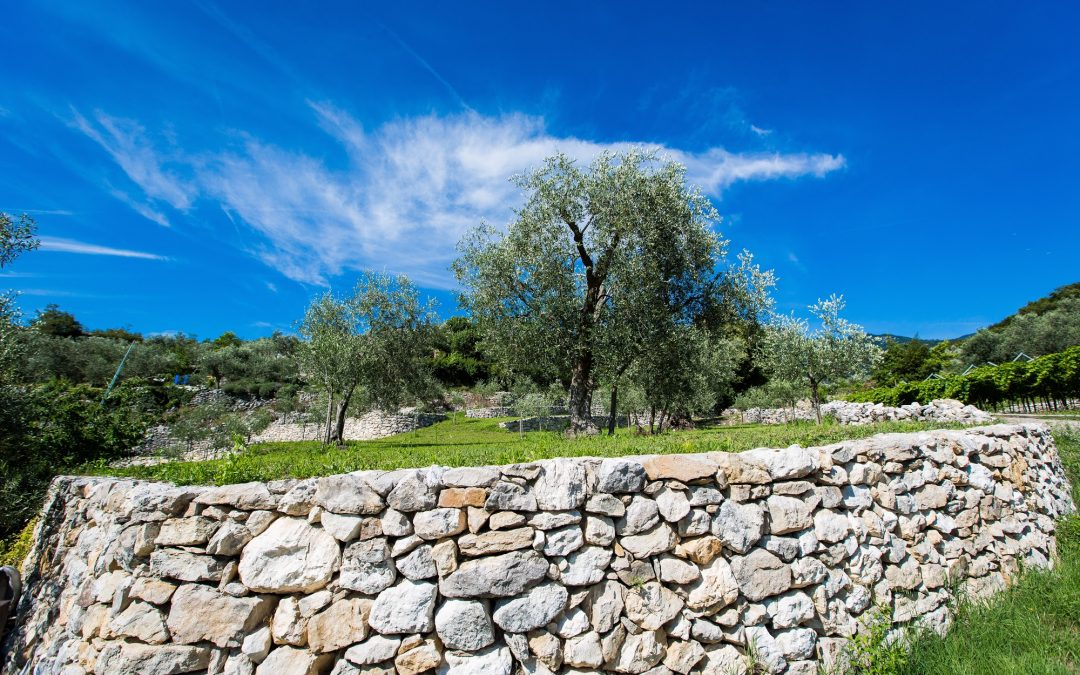 Trentiner Bio-Spezialitäten  aus Trauben und Oliven