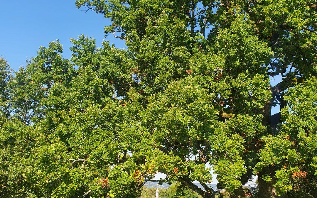 Naturdenkmal Baum