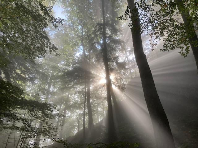 Den Wald an den Klimawandel anpassen